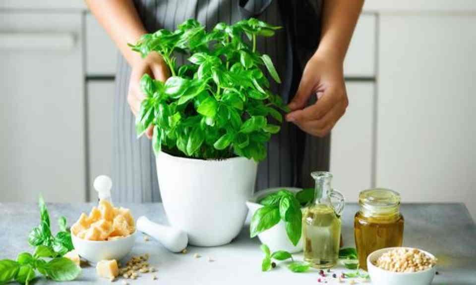 Kruidenplanten in de keuken: zo houd je ze wél in leven – adviezen van kruidenkweker Lode Claus